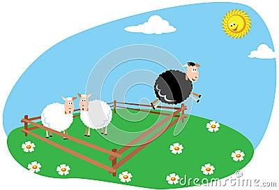 Black Sheep Stock Image - Image: 20001541