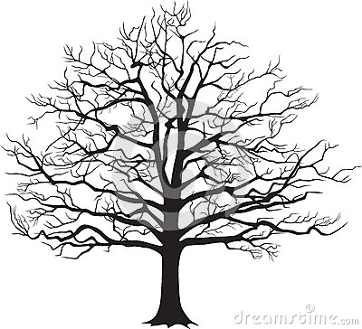 Black silhouette bare tree . Vector illustration Vector Illustration
