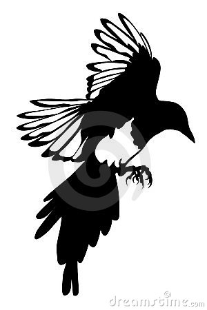 Black silhouette of raven isolate