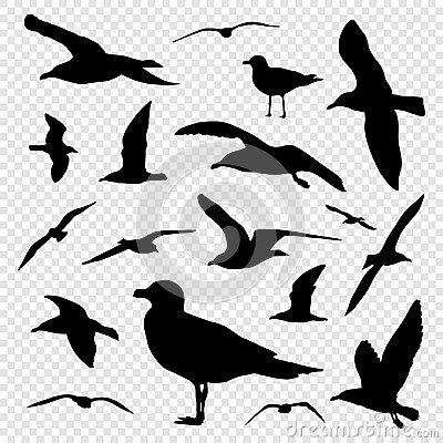 Free Black Silhouette Set Of Seagull On Transparent Background Vector Royalty Free Stock Photos - 99569968