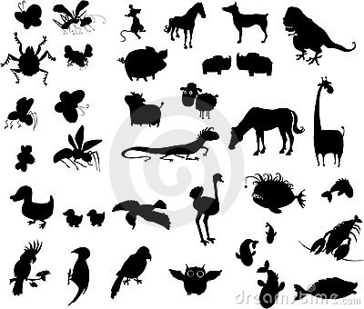 Black silhouettes of animals, insects, fishes