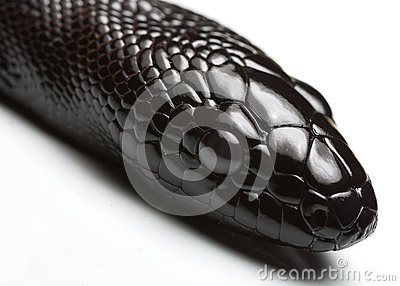 Black Snake Stock Photos - Image: 25574373