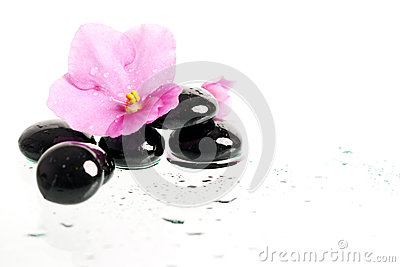 Black spa stones and pink flower on white
