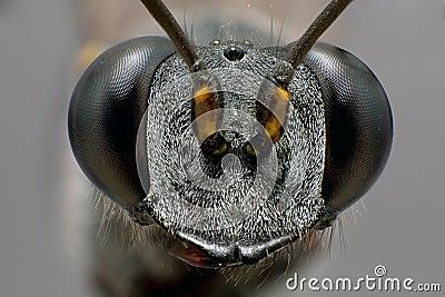 Black Stinger
