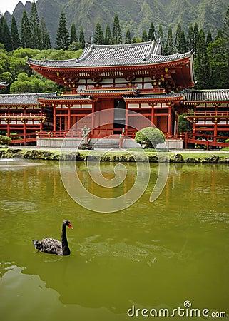 Black swan, byodo in temple