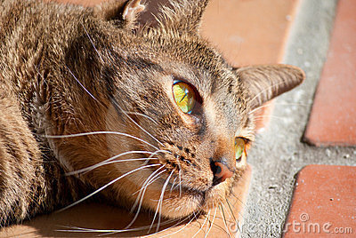 Black tabby cat with green eyes in sunshine
