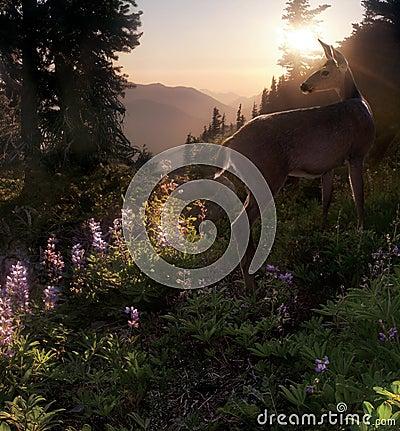 Free Black Tail Deer Royalty Free Stock Photo - 1237875