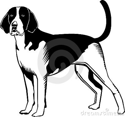 Black and white American Fox hound dog Vector Illustration