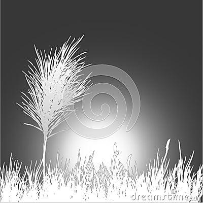 Black and white background . Vector Illustration