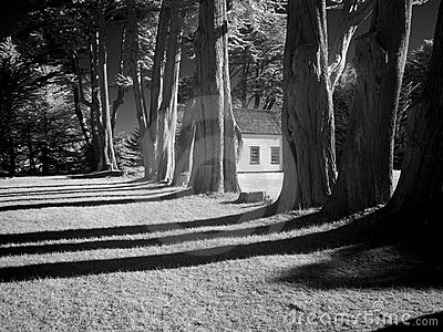 Black and white of building and trees
