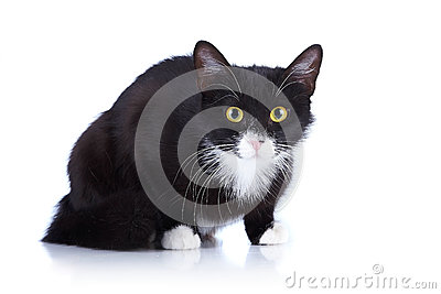 Black-and-white cat with yellow eyes.