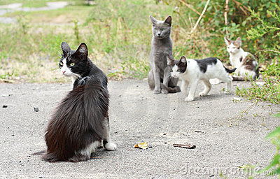 Black-and-white cat and kittens