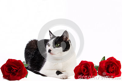 Black and white cat with red roses
