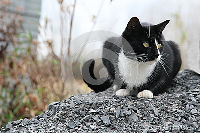Black and white cat sits on gravel