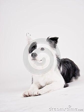 Black and white dog (39)