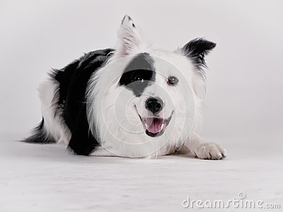 Black and white dog (41)