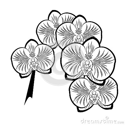 Black and white drawing of orchid flowers