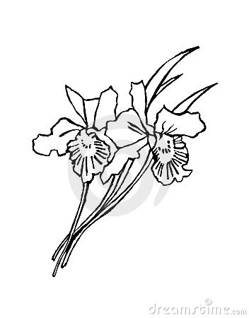 black and white flowers drawings. white flowers drawings.