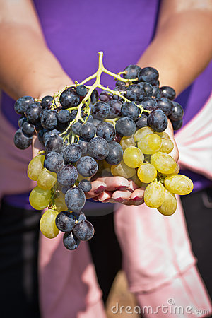 Black and white grapes in female hands