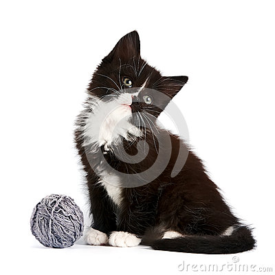 Black-and-white kitten with a woolen ball