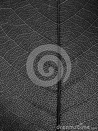 Black and white leaf Macro