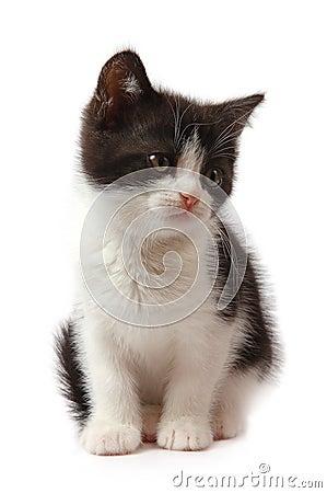 Black-white little kitten
