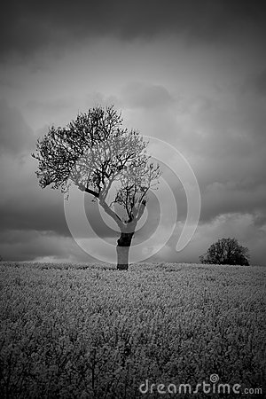 Free Black White Moody Atmospheric Tree In Countryside Stock Image - 53878851
