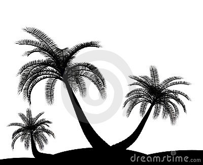 Black on white palm tree environment