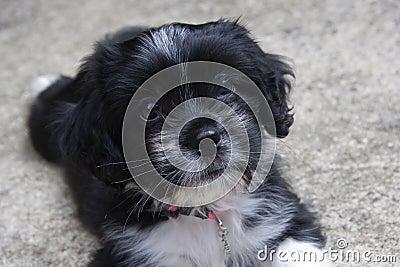 Black & White Puppy Face