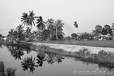 Black & White Tropical Village Landscape