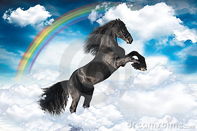 Black wild horse under rainbow in clouds
