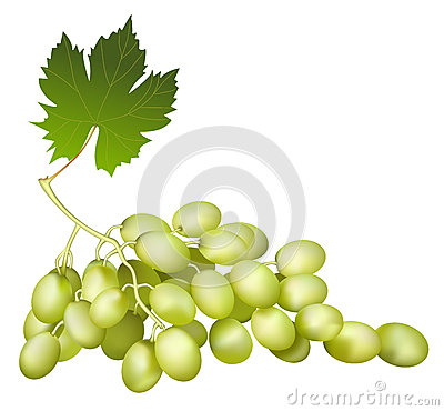 Black wine grape