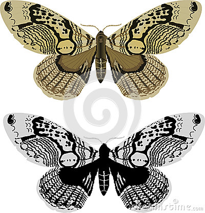 Black and yellow butterflies isolated on white