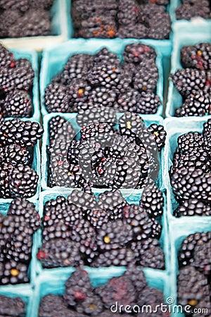 Free Blackberries Stock Images - 17461184
