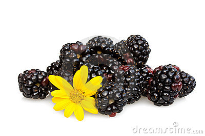 Blackberries And Capedaisy