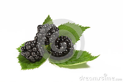 Blackberries Leaves White Background