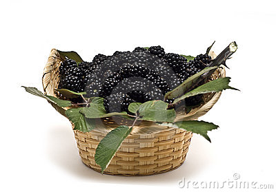 Blackberries XV