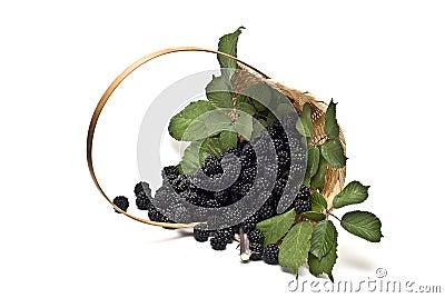 Blackberries XVI