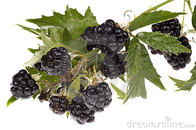 Blackberry brunch
