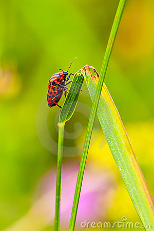 On the blade of grass