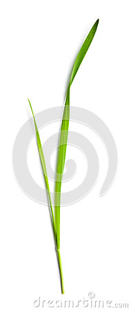 Free Blade Of Grass Stock Images - 40069964
