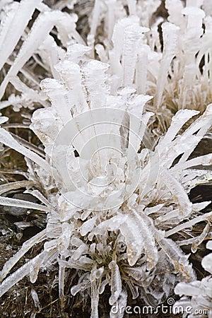Bladen van ijs
