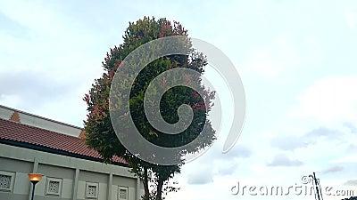Bladeren op de boomslingering wegens de wind stock footage