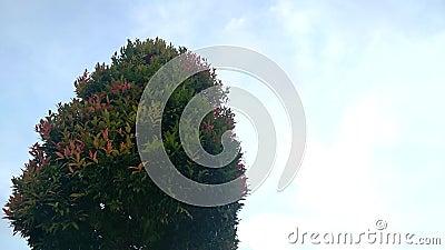 Bladeren op de boomslingering wegens de wind stock video