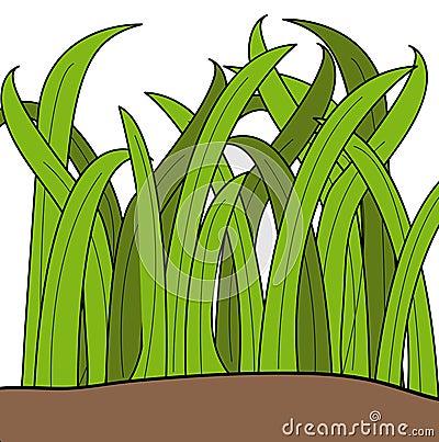 Blades of grass Vector Illustration