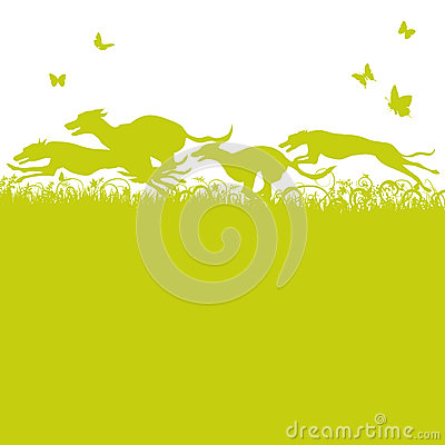 Free Blades Of Grass And Running Dogs And Greyhounds Royalty Free Stock Image - 42096596