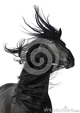 Blanc de verticale d isolement par cheval noir de fond