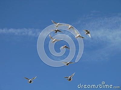 Blanco en vuelo