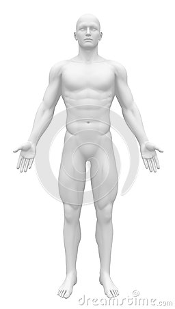 Free Blank Anatomy Figure - Front View Stock Photos - 30057883