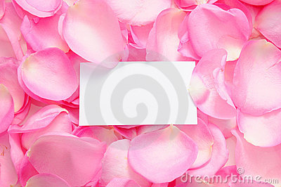 Blank card with rose petals